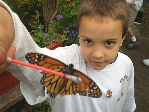 Butterfly20100606_36